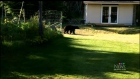 Spike in wildlife sightings around Shawnigan Lake