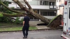 Decades-old tree crashes down in West End
