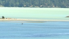 Caribbean-like water in Sooke from weather, algae