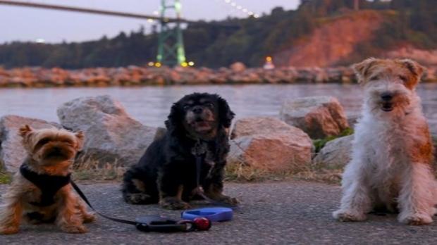Uber For Walking Dogs