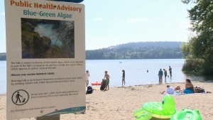 Ingesting water containing the blue-green algae may cause a range of symptoms, including headaches and abdominal pain in humans and can lead to lethal liver damage in dogs. (CTV Vancouver Island)