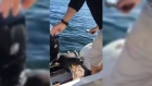 Seal escapes pod of whales