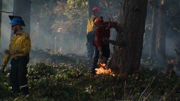 Parks Canada employees light small sections of Tumbo Island, B.C. on fire in hopes that new growth will be spurred on the tiny island, which hasn't seen fire in over a century. Sept. 30, 2016. (CTV Vancouver Island)