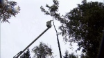 Wind warning issued for Metro Vancouver