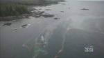 'Tragic' fuel spill spreads near Bella Bella