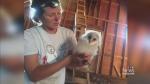 Rare baby barn owls born at Delta farm