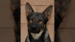 The German shepherd continued to lead the way until the man was located.