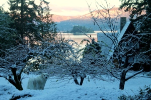 Vancouver Island got its first taste of winter this week and meteorologists say more snow is on the way.