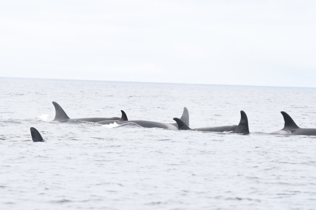 orcas vancouver island